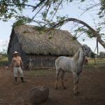 work in farm in Trinidad_552946807