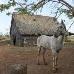 work in farm in Trinidad_341643209