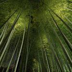Bamboo grove, bamboo forest at Arashiyama, Kyoto, Japan_414258727