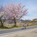 Cherry Blossom Road in Arashiyama, Kyoto, Japan_407825641