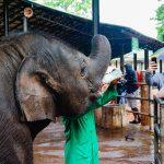 Pinnawala elephant orphanage_562660549