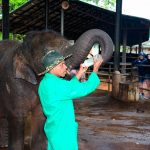 Pinnawala elephant orphanage_562660525