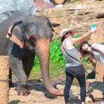Pinnawala elephant orphanage in Rambukkana, Sri Lanka_529790992