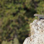 Yosemite National Park_562908823