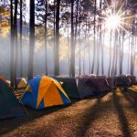 Camping and tent under the pine forest in sunset at Pang-ung, pine forest park_556746301