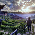 Tea plantation and village at Ban Rak Thai_549560272