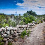 The path of Reganico in capraia_566772340