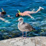 Seagull with children in capraia_566772400
