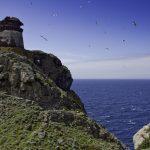 tower of Zenobito and Calarossa_391001071