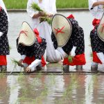 holy festival to pray for a good harvest in kagawa_286684220