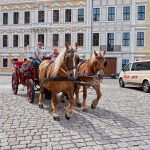crew of the horses in the street in Dresden_565185373