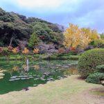 garden in Umi Jigoku or sea hell_538691035