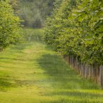 Beautiful tree lined avenue at Lyme Park, Disley_578183689
