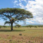 Serengeti National Park, Tanzania_581109793