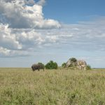 Serengeti National Park, Tanzania_581110414