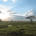 Serengeti National Park, Tanzania, Africa_575894365