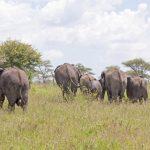 Serengeti National Park_357395273