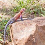 Serengeti National Park_147828320