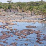 Serengeti National Park_147320285