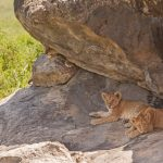 Serengeti National Park_135775433