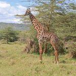 Serengeti National Park_135775439