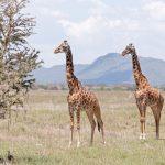 Serengeti National Park_133040720