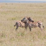 Serengeti National Park_130240163