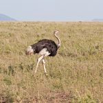Serengeti National Park, Tanzania_132100724
