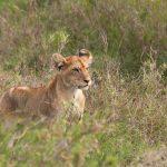 Serengeti National Park, Tanzania_131599367
