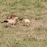Serengeti National Park_129914585