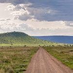Serengeti National Park, Tanzania_123775198