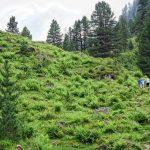 landscape of Gerlostal as part of Zillertal valley in summer_587059568