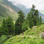 landscape of Gerlostal as part of Zillertal valley in summer_587059577