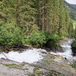 Gerlos riving flowing through pine tree forest in european alps Zillertal (Austria)_586521911