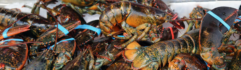 Connecticut Lobster Plant Closure Could Shift Jobs To Maine