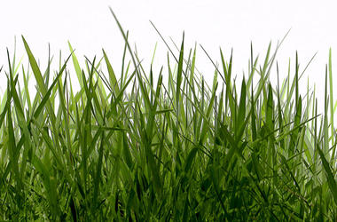 grass-dreamstime_m_39006295.jpg