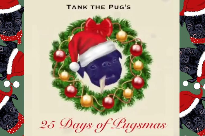 Tank the Pug's 25 Days of Pugsmas