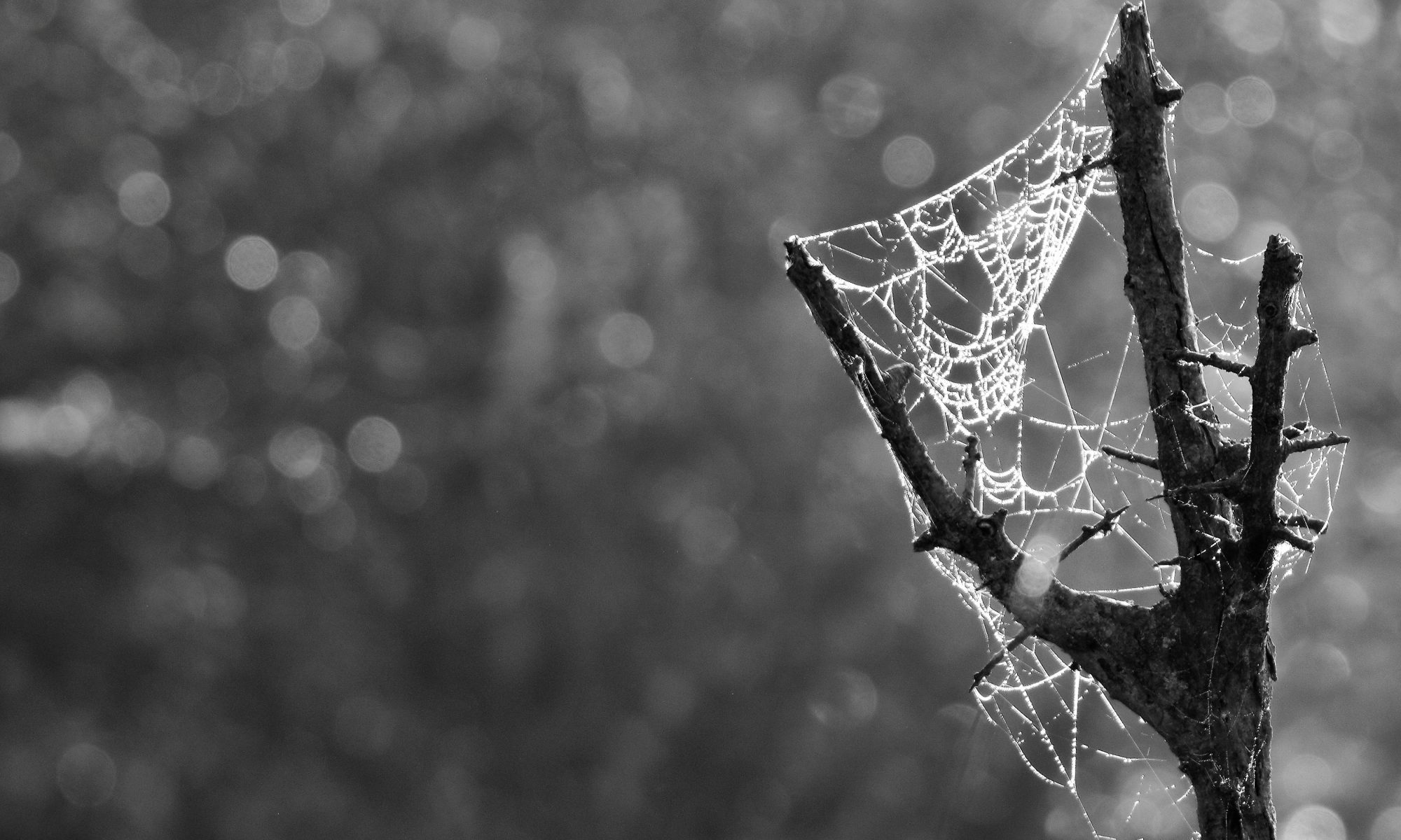 cobwebs By Airwolfhound [CC BY-SA 2.0 (https://creativecommons.org/licenses/by-sa/2.0)], via Wikimedia Commons