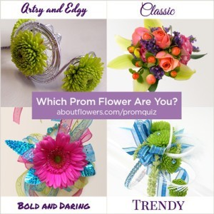 Which Prom Flower Are You? Take the quiz to see how your personality can help you pick the perfect prom flowers to fit your style. http://www.aboutflowers.com/promquiz/