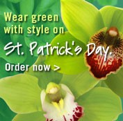 St. pat Day - banner ad 177x175 pixels