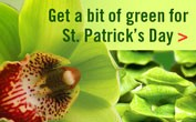 St. Patrick's Day - banner ad 177x110 pixels