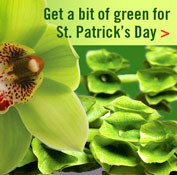 St. Patrick's Day - banner ad 177x175 pixels