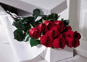 stock image of unarranged long stem red roses