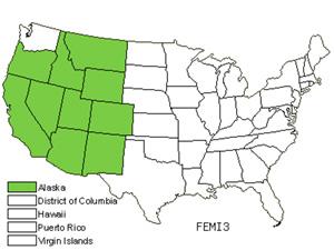 FEMI3.jpg