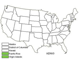 HEMA9.jpg