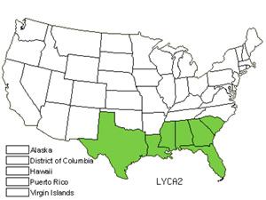 LYCA2.jpg
