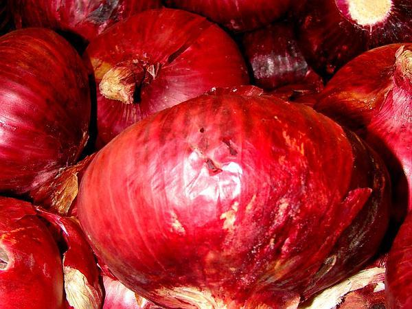 Garden Onion (Allium Cepa) https://www.sagebud.com/garden-onion-allium-cepa