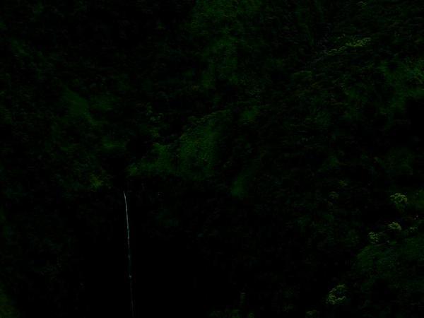 Aleurites (Aleurites) https://www.sagebud.com/aleurites-aleurites/