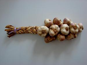 Cultivated Garlic