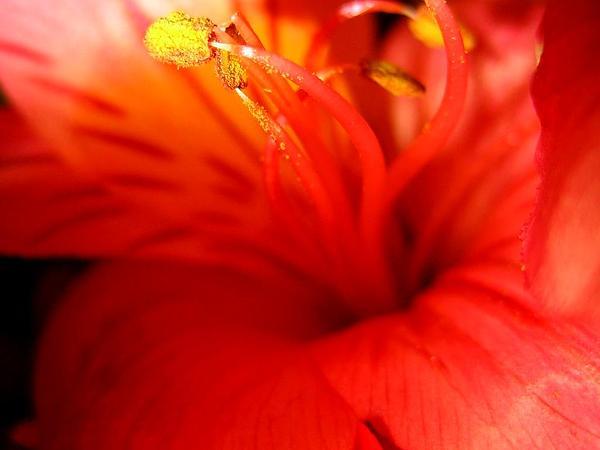 Lily Of The Incas (Alstroemeria) https://www.sagebud.com/lily-of-the-incas-alstroemeria